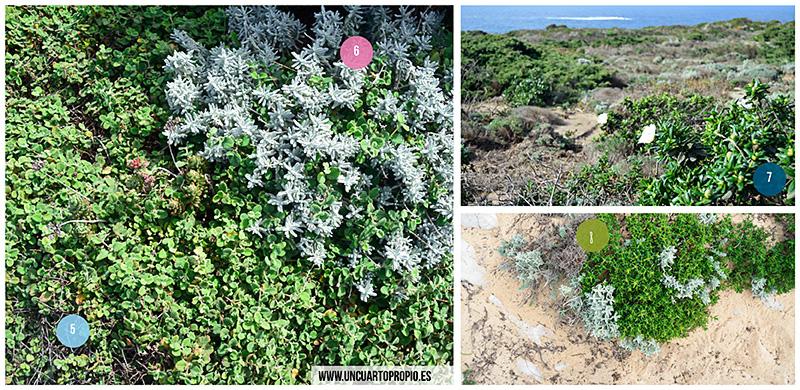 Plantas condiciones extremas
