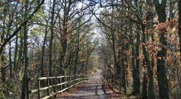 Subvenciones plantaciones de especies con producciones forestales